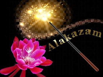 "Alakazam ""2nd place"""