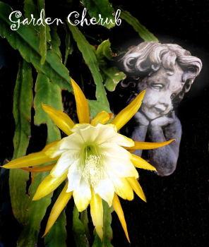 "Garden Cherub  ""3rd place"""